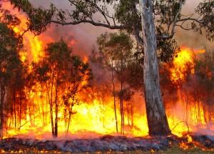 Atlas Queensland Fire Service